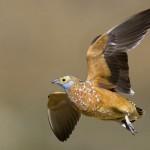 Hunting Bird Africa