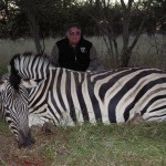 Burchell's Plain Zebra