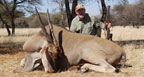 Hunting Africa Cape Eland
