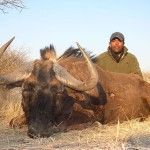 Blue/Black Wildebeest