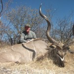 Greater Kudu