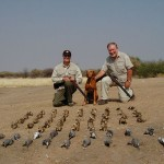 Sandgrouse and Dove